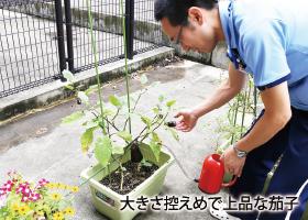園芸を愉しむ